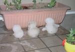 0123_snow.jpg